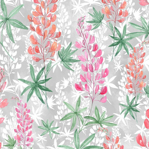 Lupins on grey.