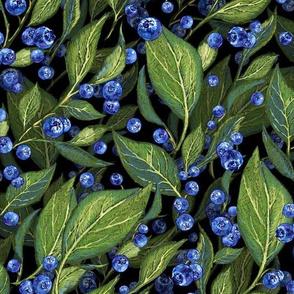 Festive Blueberries | Black