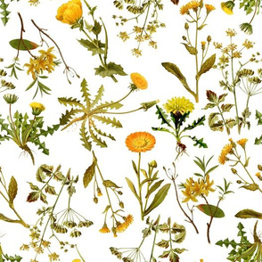 "10"" yellow vintage botanical wildflowers on  white"