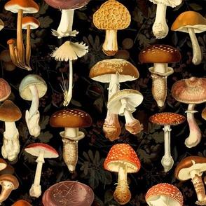 vintage hand drawn botanical fungus mushrooms double on black-Antique mushroom fabric,mushrooms fabric
