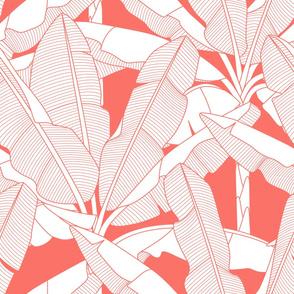 Banana Palms-Jumbo_Coral