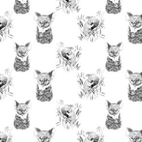 Two Koalas, Black and White
