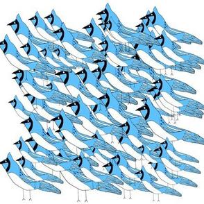 Flock of Blue Jays