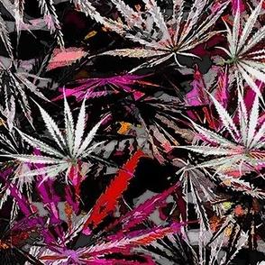 Bright Leaf Sativa