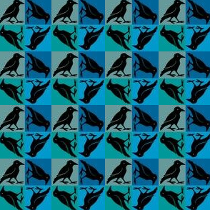 crow walkabout-blue