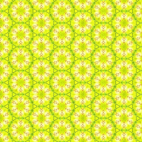 Citrusy Lemon Lime Circles