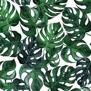 """9"""" Monstera Palm Leaves - Dark green on white"""