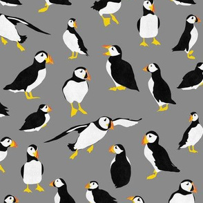 Puffins on Gray
