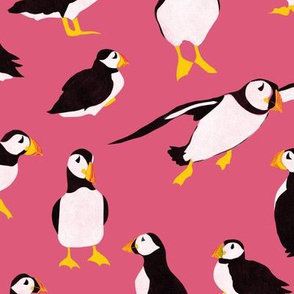 Puffins on Pink