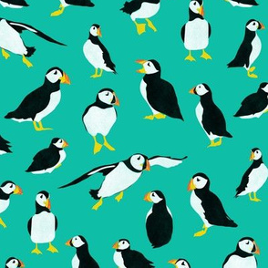 Puffins on Turquoise