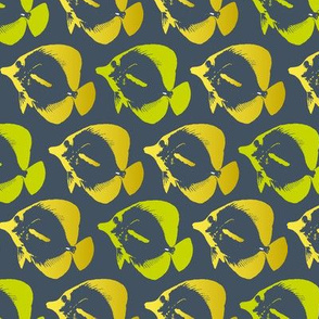 yellow tang multi