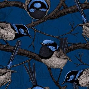 Night fairy wrens