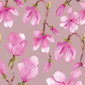 Magnolia Careys Pink