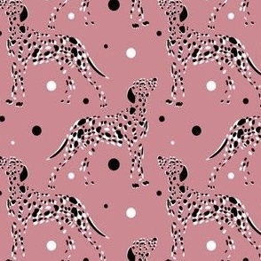 Dalmatian dogs on a pink background
