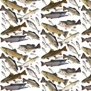 8365711-fish-ed-by-tiger561