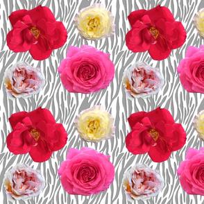 zebra roses