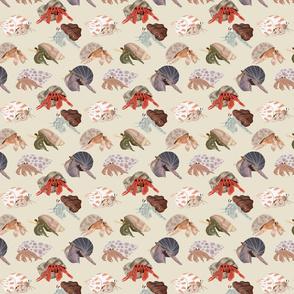 Hermit Crabs - smaller print