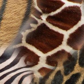 Animal Print Furs