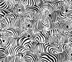 Zebra's Breach