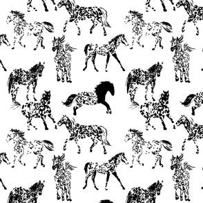Horse Freckles - Appaloosas