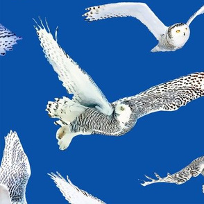 Snowy Owls of Arctic on Dark Blue