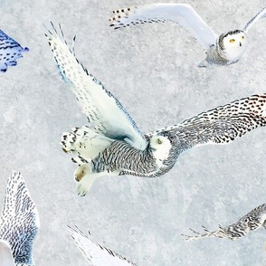 Snowy Owls of Arctic on Snow