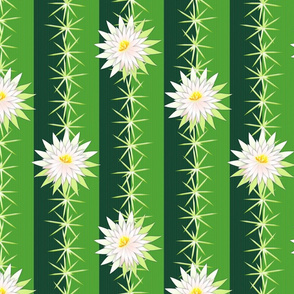 cactus blossoms12