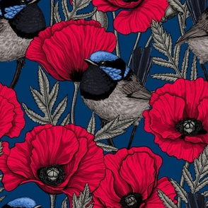 Fairy wren and poppies