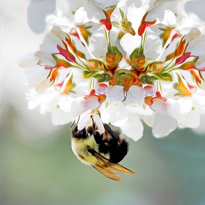 bumble bee on white