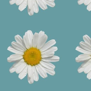 Daisy with Raindrops on Deep Aqua