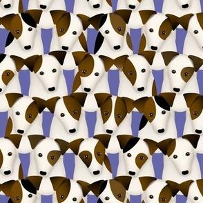 Parson / Jack Russell Terrier dogs with cute head tilt / columnar pattern / peach