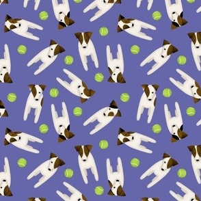 Parson Jack Russell Terriers with cute doggy head tilt / Purple