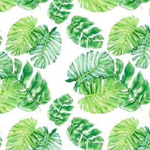 Tropical Green Leaves