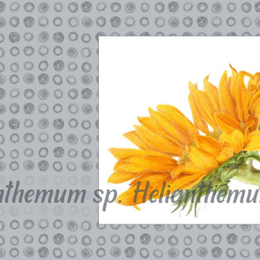 Tea Towel Sunflower