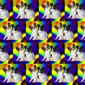 rainbow papillon dogs