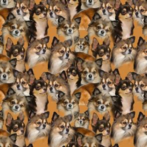 seamless chihuahua dog fabric