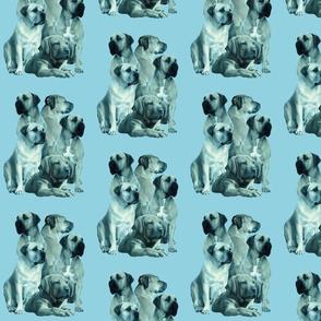 mastiff family in blue