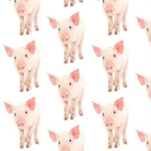 Pigs are the best