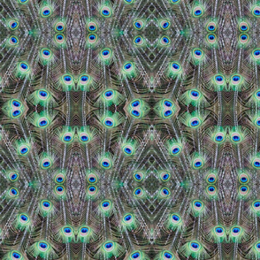 Peacock Feather Repeating Pattern