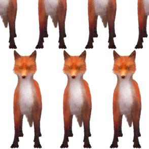 Red Fox Stare, L