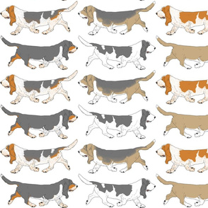 Trotting Basset hound border - white