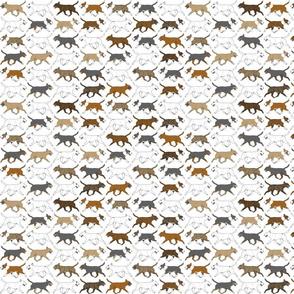 Small Trotting Miniature Bull Terrier border - white