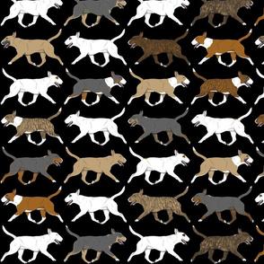 Trotting Miniature Bull Terrier border - black