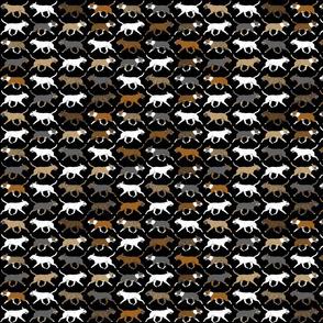 Small Trotting Miniature Bull Terrier border - black