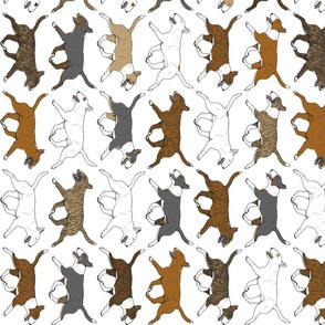 Trotting Miniature Bull Terrier border vertical - white