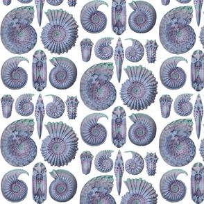Ernst Haeckel Ammonitida Ammonite Ocean Blues