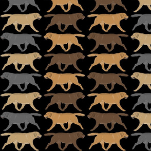 Trotting Labrador Retriever border - black