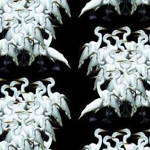 EgretsGalore