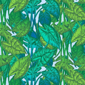 Paradise Blue   Caladium