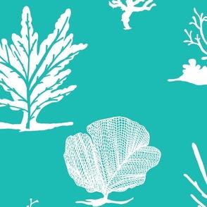 Coral Coral Aqua white